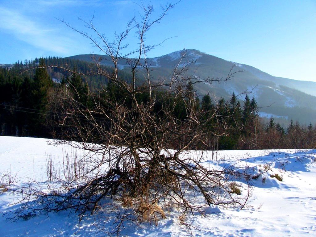 Zimní pohled na lysou horu